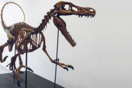 3D printed dinosaur from voxeljet